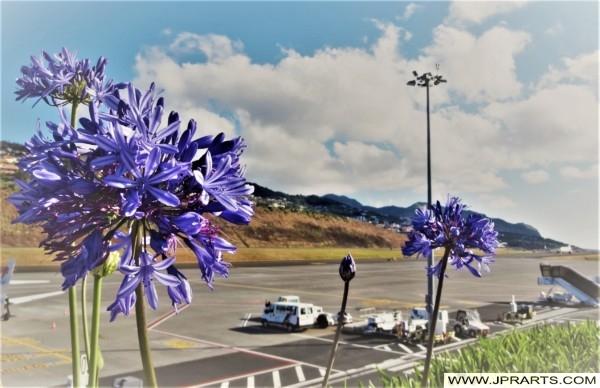 Flores no Aeroporto da Madeira
