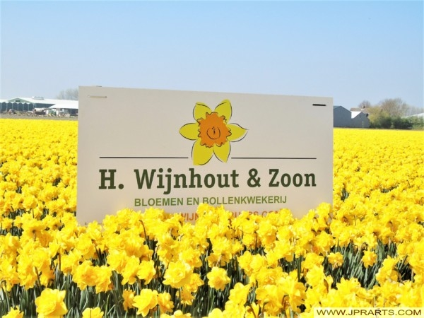 Flower and Bulb Farm H. Wijnhout & Zoon in the Bollenstreek (Hillegom, the Netherlands)