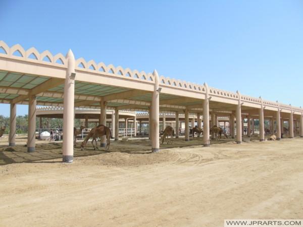 L'Hébergement des Chameaux à la Ferme Royale de Bahreïn