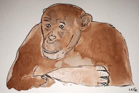 Encre de chine et aquarelle, chimpanzé