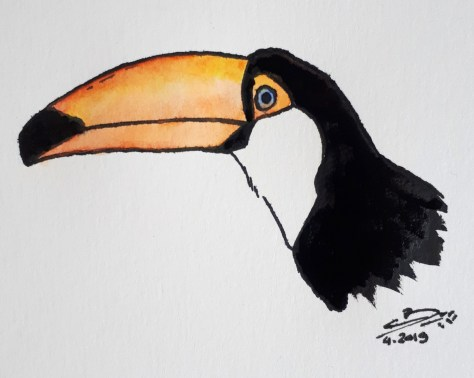 Aquarelle et encre de chine, toucan