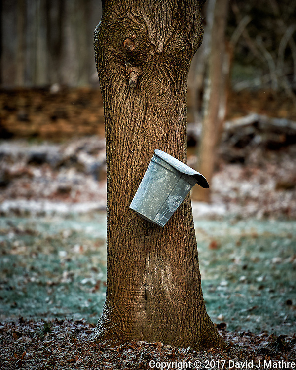 Maple sap collection bucket after a quick snowfall. Winter nature in New Jersey. Image taken with a Nikon Df camera and 70-200 mm f/2.8 lens (ISO 400, 200 mm, f/2.8, 1/250 sec). (David J Mathre)