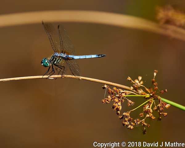 Dragonfly. Image taken with a Nikon D850 Camera and 70-300 mm VR lens (DAVID J MATHRE)