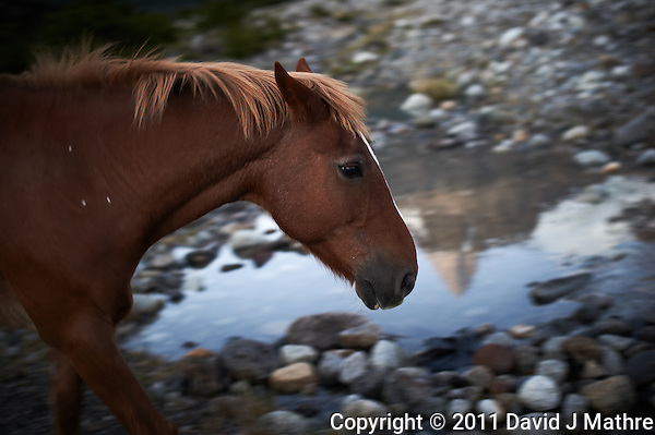 Reflection of Fitzroy in the Morning with a Horse. Hosteria El Pilar in El Chalten, Argentina. Image taken with a Nikon D3s and 50 mm f/1.4G lens (ISO 400, 50 mm, f/2.8, 1/25 sec). Patagonia workshop with Thom Hogan, Day 7. (David J Mathre)