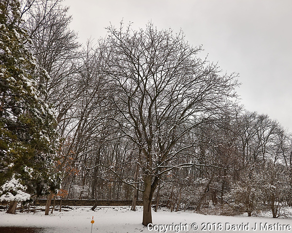 April Snow -- Winter is not gone. Image taken with a Leica CL camera and 18 mm f/2.8 lens (ISO 100, 18 mm, f/4, 1/400 sec). 5 (David J Mathre)