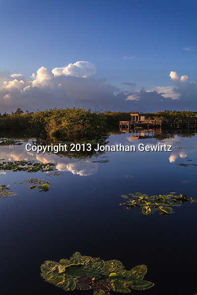 Morning at Taylor Slough on the Anhinga Trail in Everglades National Park, Florida. (Jonathan Gewirtz   jonathan@gewirtz.net)
