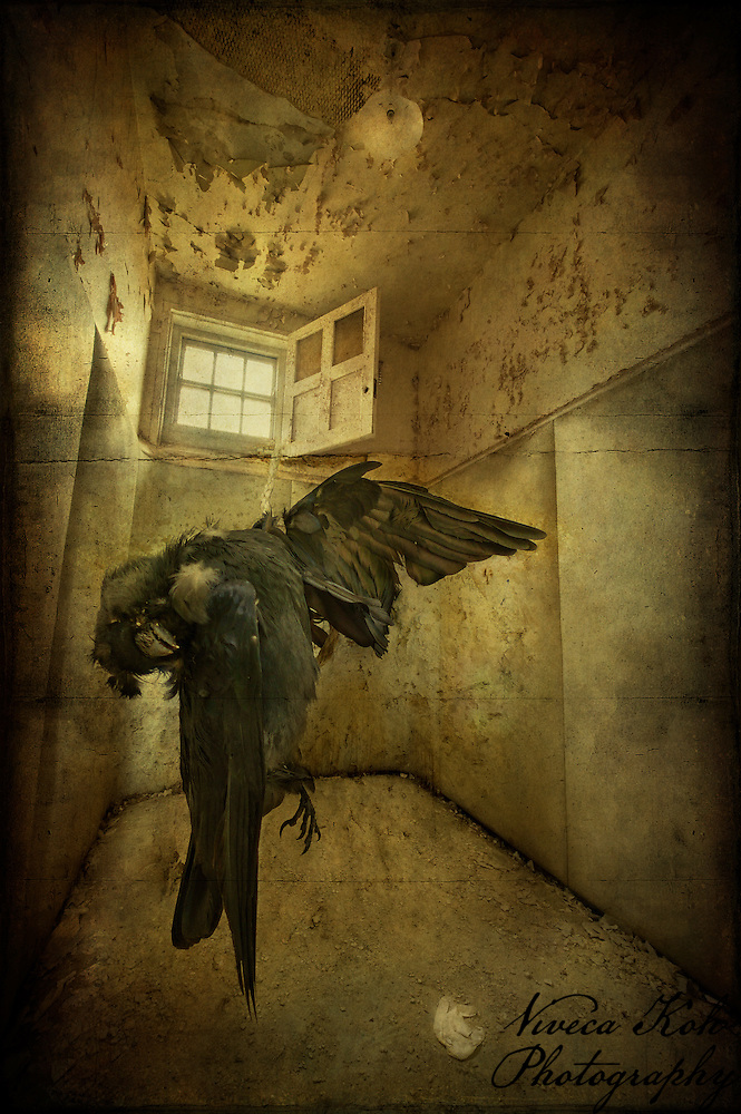 Padded cell at West Park Asylum, with dead bird (Viveca Koh/Viveca Koh ARPS)