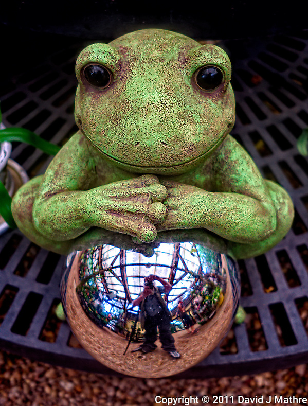 Frog & Mirror. Marie Selby Gardens Gift Shop - Sarasota, Florida. Image taken with a Leica X1 (ISO 100, 24 mm, f/2.8, 1/30 sec) (© 2011 David J Mathre)