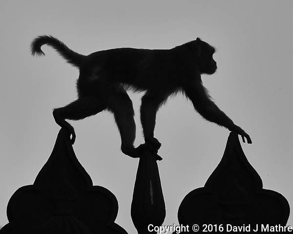 Silhouette of a monkey climbing at the Taj Mahal Image taken with a Nikon 1 V3 camera and 70-300 mm VR lens (ISO 200, 212 mm, f/5.6, 1/1000 sec). (David J Mathre)