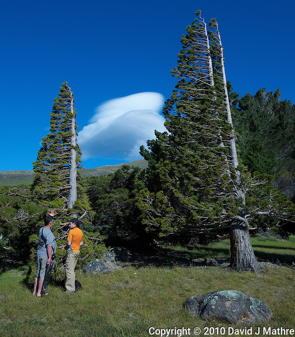 Thom and Thomas Discussing the Photography of Wind Blown Trees in Patagonia. Estancia Helsingfors in Argentina. Image taken with a Nikon D3x and 16-35 mm f/4 lens (ISO 125, 26 mm, f/11, 1/250 sec). (David J Mathre)