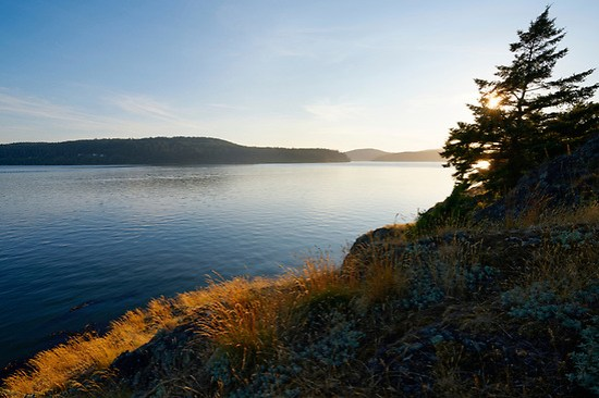 Grassy meadow on rocky coast overlooking Skagit Bay, Skagit Island Marine State Park, Skagit County, Washington State, USA (Brad Mitchell Photography)