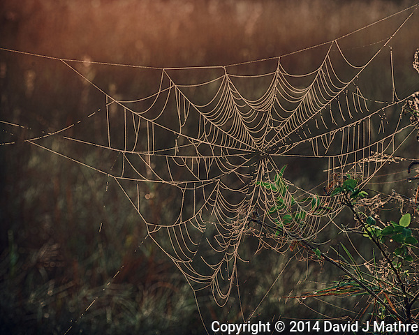 Dew Covered Spider Web at Sunrise. Big Cypress Swamp National Preserve in Florida. Composite of 3 Images taken with a Nikon Df camera and 80-400 mm VRII lens (ISO 100, 140 mm, f/8, 1/50, 1/13, 1/3 sec). Raw image processed with Google HDR Efex Pro. (David J Mathre)