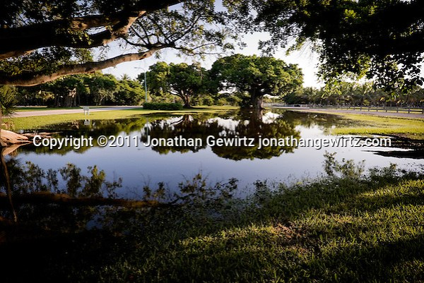 A view of banyan fig trees reflected in pools of rain water at Crandon Park, Key Biscayne, Florida. (Jonathan Gewirtz)