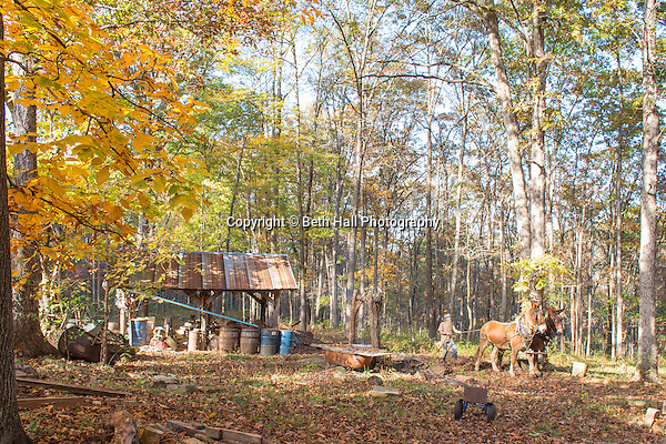 Robert Runyon walks his mules Jasper and Jenny through his yard at their home in Sugar Tree Hollow in Winslow, Arkansas, for Out Here Magazine. Photo by Beth Hall (Beth Hall)