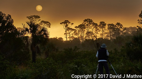 Photographer and tripod viewing the sun rising over the trees in the early morning fog. Merritt Island National Wildlife Refuge. Image taken with a Fuji X-T2 camera and 100-400 OIS lens (ISO 200, 100 mm, f/7, 1/680 sec). (David J Mathre)