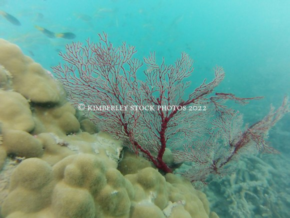 Underwater Macleay Island (Richard Costin/Kimberley Media)