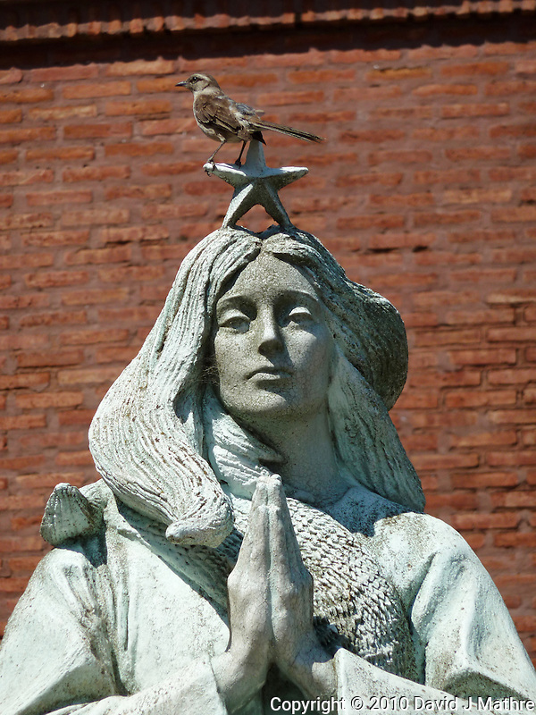 Bird on Virgin Mary Statue in Buenos Aries. Images taken with a Leica V-Lux 20 camera (ISO 80, 49 mm, f/5.6, 1/640 sec) (David J Mathre)