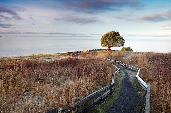 Pacific Madrone tree and trail through prairie, Westside Preserve, San Juan Island, Washington, USA (Copyright Brad Mitchell Photography)