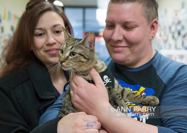 Wantagh, New York, USA. February 7, 2016. Tiger the tabby cat, one of the team players in the Hallmark Channel Kitten Bowl III, is with his new family, CHARLIE BROWN, who's holding the star whose new name is Yogi, and MELANIE BENEDETTO, of Massapequa, at Last Hope Animal Rescue's Open House, where the adoption center's volunteers and visitors watch the game on TV and cheer on their team, the Last Hope Lions. Over 100 adoptable kittens from Last Hope Inc and North Shore Animal League America participated in the taped games, and the Home and Family Felines won the 2016 championship, which first aired the day of Super Bowl 50. (Ann Parry/Ann Parry, ann-parry.com)