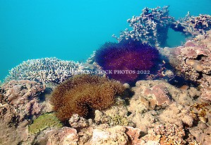 Brilliantly coloured anemones, sponges and corals line the edge of Turtle Reef, in Talbot Bay on the Kimberley coast. (Annabelle Sandes/© Annabelle Sandes | Kimberley Media 2010)