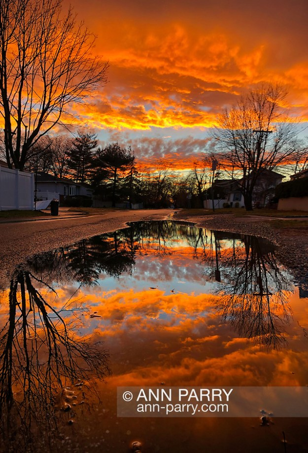 Merrick, New York, USA. January 24, 2019. After flash flood, reflection of colorful winter sunset fills large puddle in road of suburban town on south shore of Long Island. (© 2019Ann Parry/Ann-Parry.com)