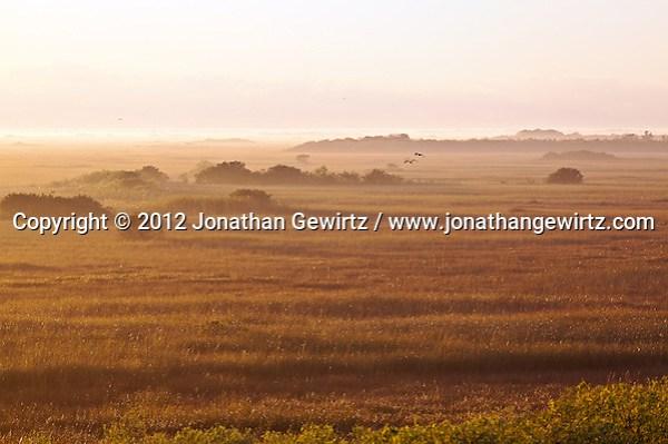 Birds fly above the ground fog at sunrise on the sawgrass prairie in the Shark Valley section of Everglades National Park, Florida. (© 2012 Jonathan Gewirtz / jonathan@gewirtz.net)
