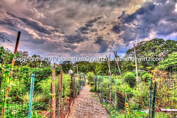 HDR view of the Newark Street Community Garden in Washington, DC after a summer storm. (© 2012 Jonathan Gewirtz / jonathan@gewirtz.net)