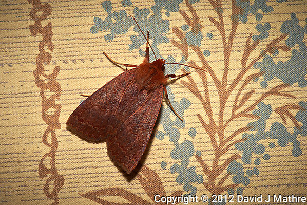 Moth -- Indoor autumn nature in New Jersey. Image taken with a Nikon D4 camera and 105 mm f/2.8 VR macro lens (ISO 100, 105 mm, f/29, 1/250 sec) + flash. (David J Mathre)
