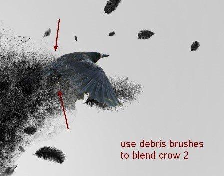 crow20a