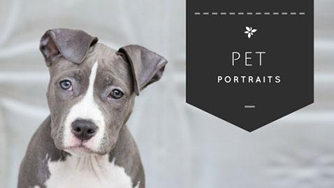 pet photography studio
