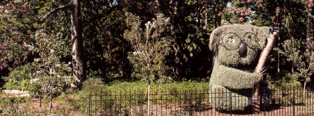 Koala bush, Sydney Botanical Gardens   Hasselblad XPan, 45mm   Kodak Ektachrome E100