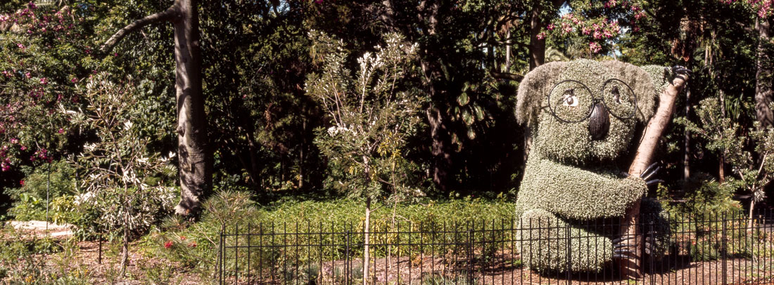 Koala bush, Sydney Botanical Gardens | Hasselblad XPan, 45mm | Kodak Ektachrome E100