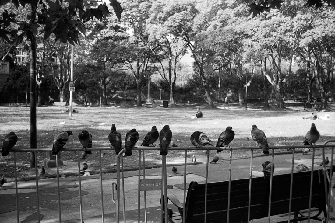 Just us birds | Prakti | Kodak Tri-X 400