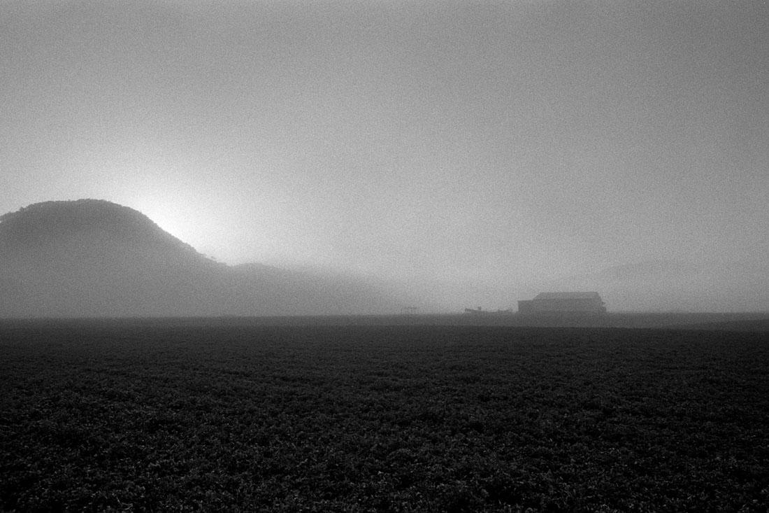 Mudgee foggy sunrise | Nikon FM2n | Nikkor 28mm f/2.8 Ai | Ilford HP5+ 400