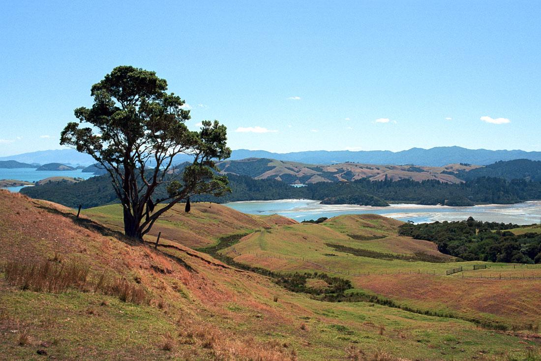 Saddle and Lookout, Coromandel Peninsula, NZ | Nikon FM2n | Nikkor 80-200 f/4.5 N Ai | Kodak Portra 400