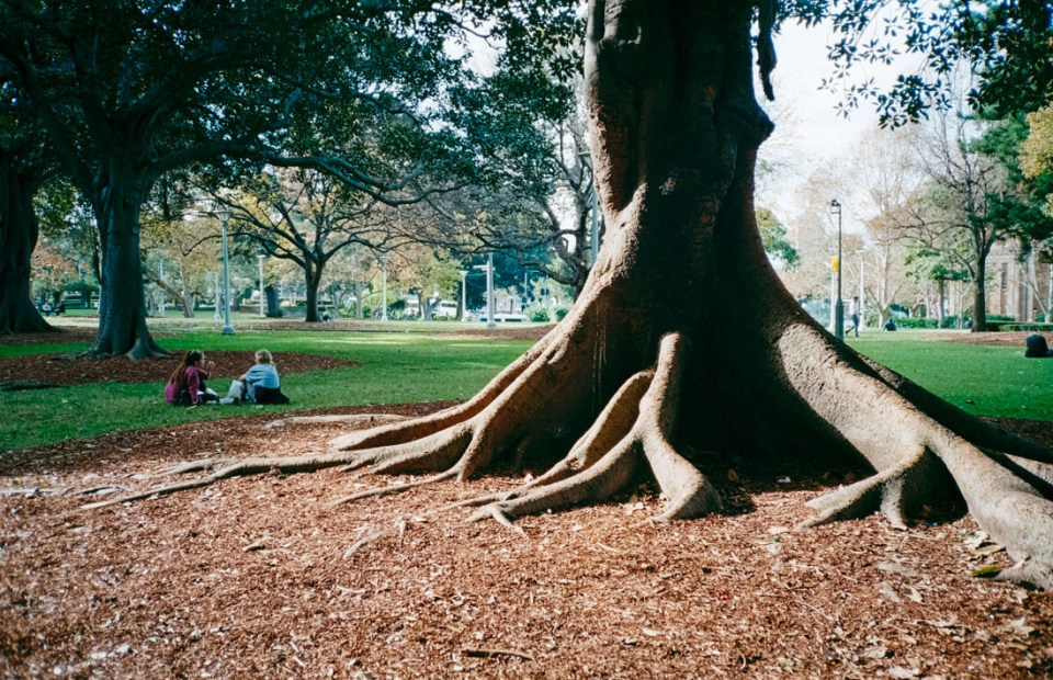 Picnic in the park   Nikon L35AF   Kodak Ultramax 400