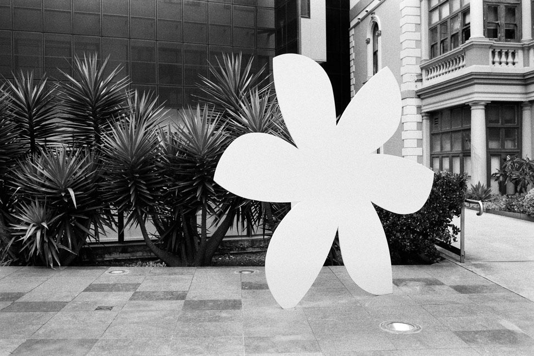 Flower | Pentax Spotmatic SP | Pentax Super-Takumar 35mm f/3.5 | Ilford HP5 Plus