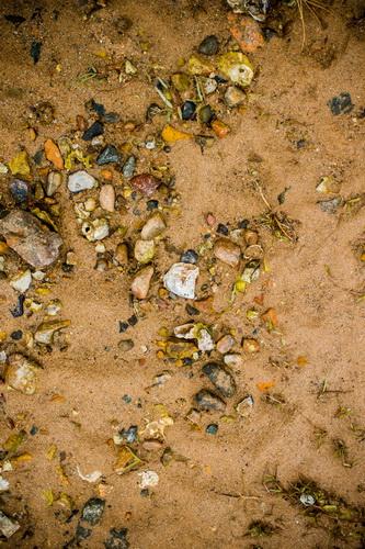 干潮後の海沿いの岩の多いビーチ