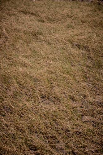 密な干し草の山