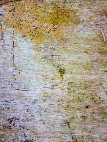 F0000053_木材の背景画像【無料コンテンツ・写真素材・商用可】