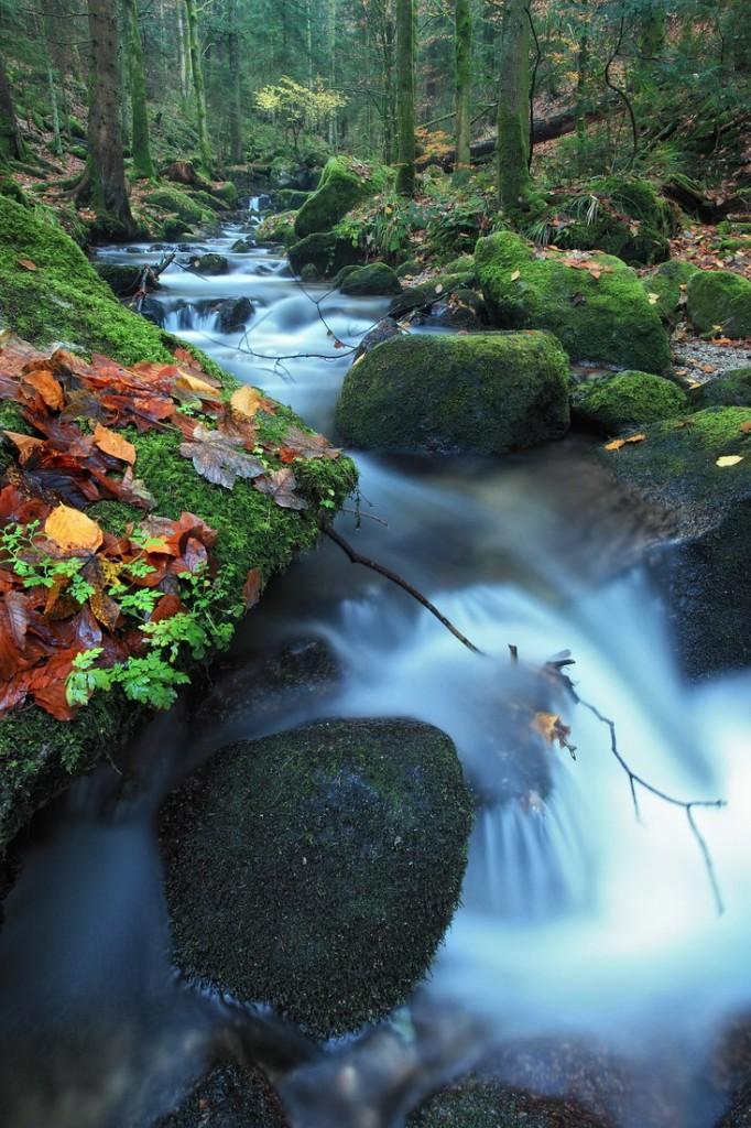 Herbstfarben im Schwarzwald