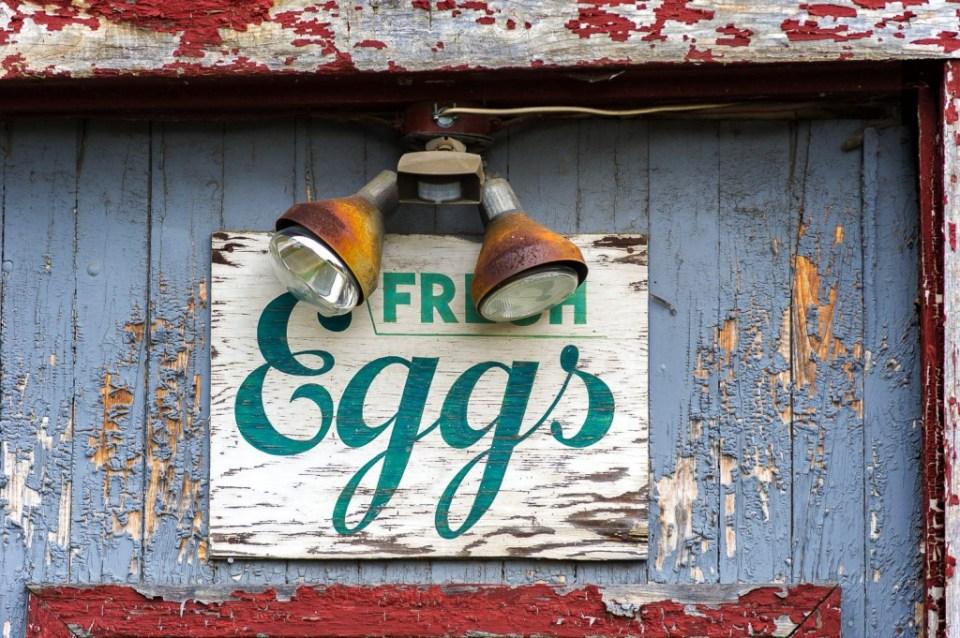 FRESH EGGS | © Serdar Ugulu