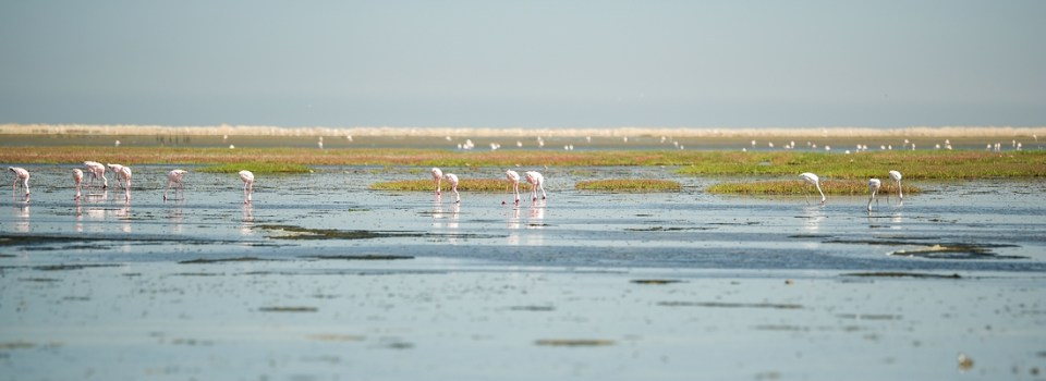 Flamingos in der Walvis Bay © Raik Krotofil