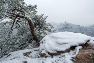 Slevogtfelsen Pfälzerwald Winter