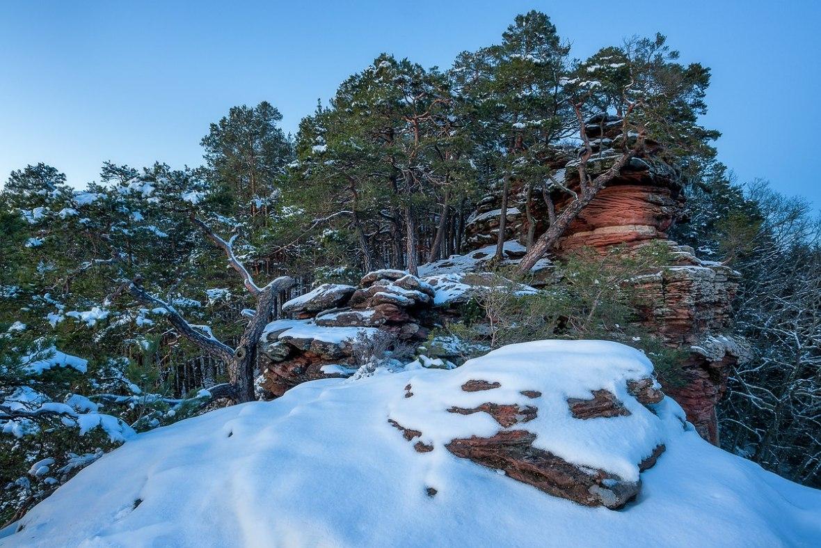 Winter Pfälzerwald