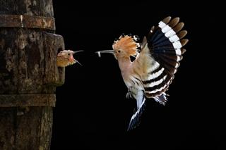 © Giovanni Frescura, Italy. Open Category Winner, Nature & Wildlife, Sony World Photography Awards 2012