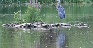 Blue Egret, 200mm, P, Spot, 1/125 sec., F4.8, ISO 320