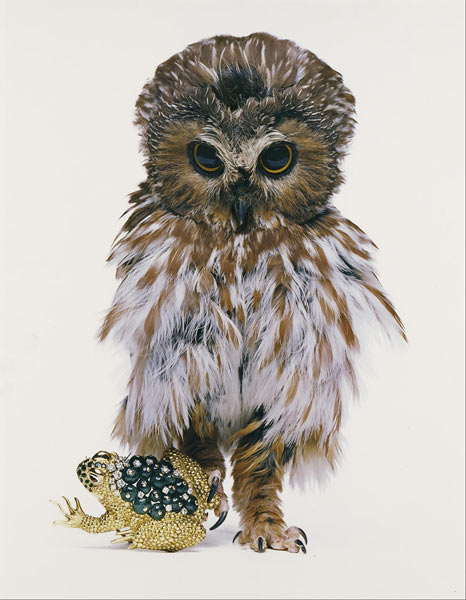 David Webb, Jeweled Toad, New York, 1963. Hiro (American, born China, born 1930). Dye imbibition print. 19 3/4 x 15 3/8 in. No. 2012.24.13. © Hiro. The J. Paul Getty Museum, Los Angeles, Purchased with funds provided by the Photographs Council