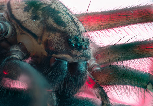 House spider captured with α7R II and 90mm Sony Macro Lens: Photo by Mikael Buck
