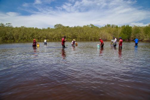 Mangrove propagules planting: Image Courtesy of Ricoh